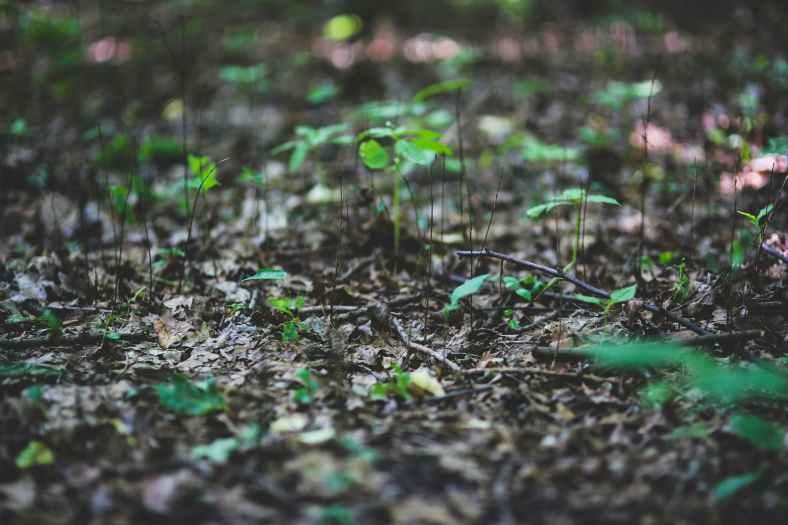 plant-leaf-leaves-plants.jpg