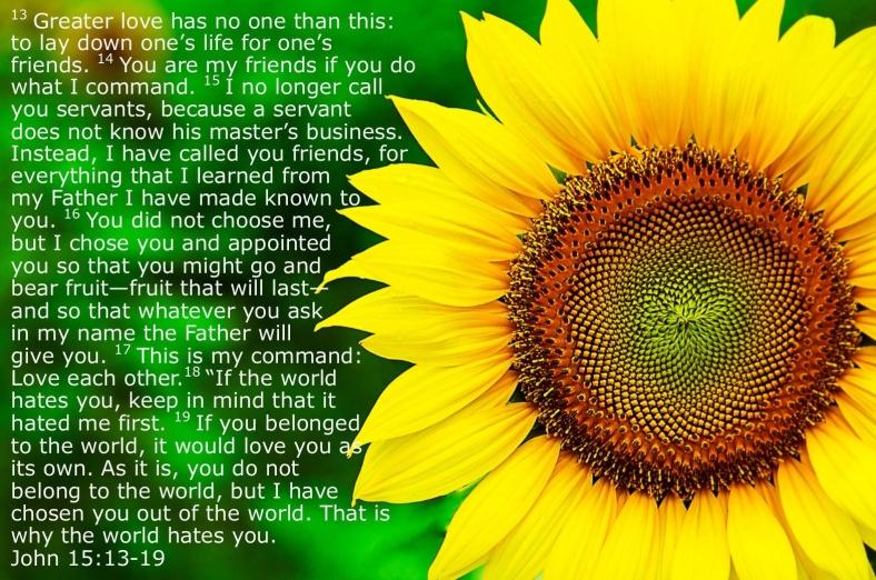 sunflower john 15